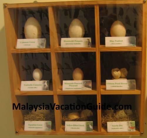 Eggs of birds at Kuala Lumpur Bird Park