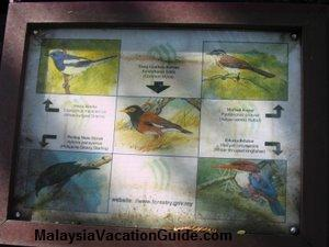 Bukit Nanas Birds