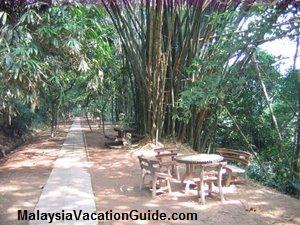 Bukit Nanas Forest Park
