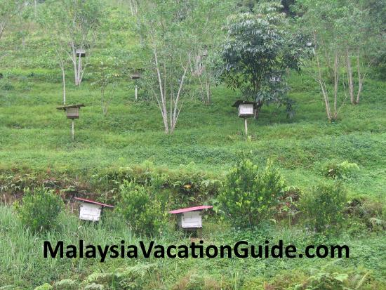 Cameron Highlands Bee Farm