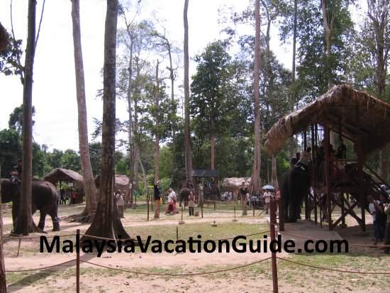 Compound of Kuala Gandah Elephant Sanctuary