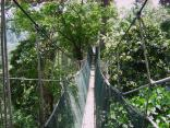 Enjoy FRIM Nature Landscapes for Hiking, Biking or Canopy Walking