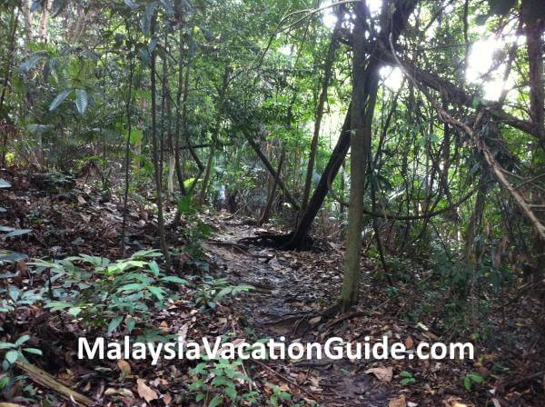 Kota Damansara Community Forest Typical Trail
