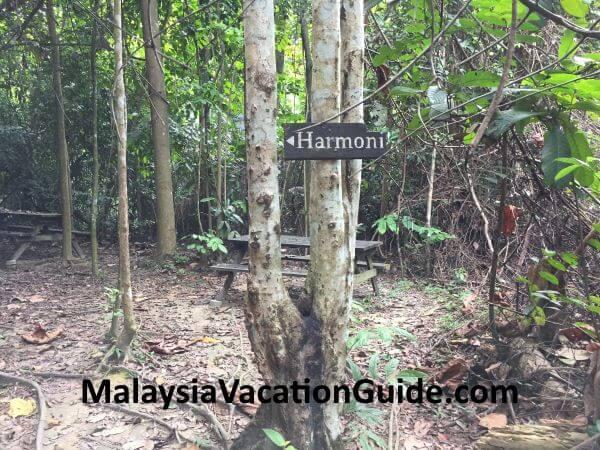 Harmony Trail at Kota Damansara Community Forest