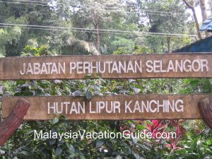 Kanching Recreational Forest