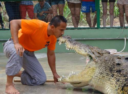 Close encounter with the crocodiles