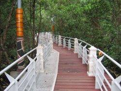 Lumut Mangrove Swamp Platforms