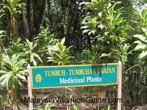 Rimba Ilmu Medicinal Plants