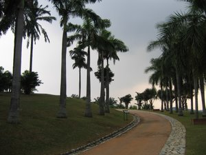 Palm Trees At Tropical Botanical Garden