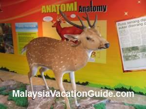 Deer At Natural History Museum Putrajaya