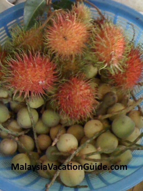 Rambutan and langsat fruits.