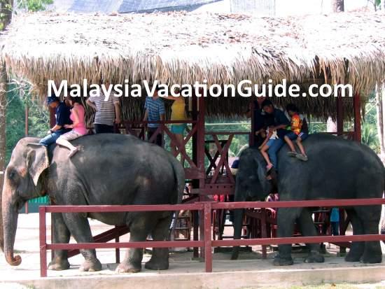 Riding the elephants at Kuala Gandah Elephant Sanctuary
