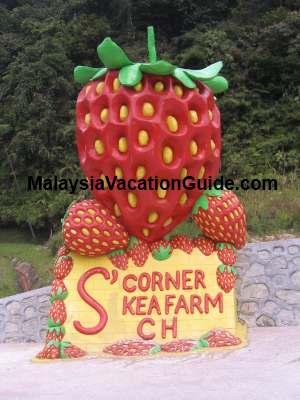 S Corner Kea Farm