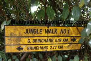 Cameron Highlands Jungle Walk