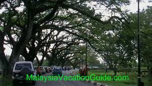 Taiping Lake Garden Trees