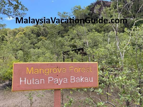Bako National Park Mangrove Forest