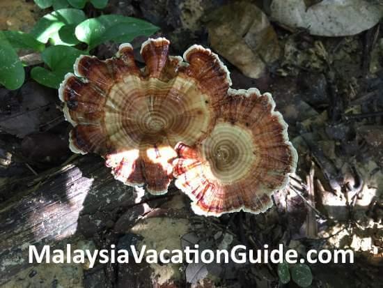 Tugu Park Mushrooms