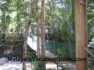 Sungai Tua Recreational Park Canopy Walk