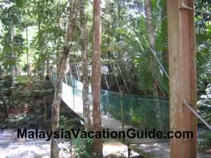 Sungai Tua Recreational Park Canopy Walk