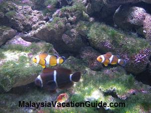 Langkawi Underwater World Aquarium