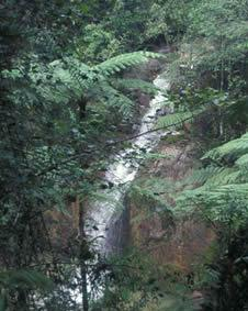 Fraser's Hill Waterfall