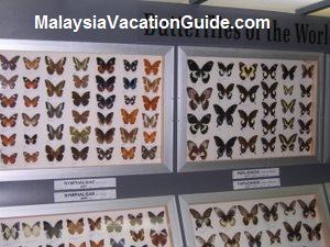 Butterflies Exhibits