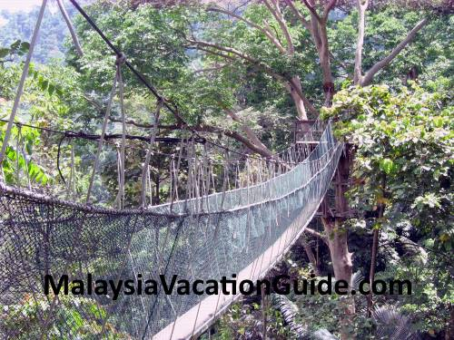 FRIM canopy walk hanging bridge