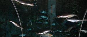 National Science Center Aquarium