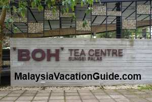 Boh Tea Centre Sungai Palas