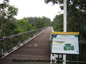 Tropical Botanical Garden Canopy Bridge