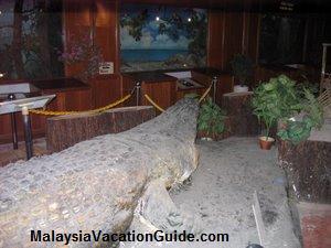 Crocodile Diorama