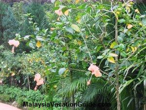 Hibiscus Garden