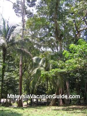 Kuala Woh Rainforest
