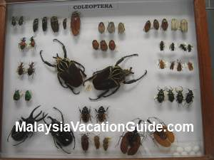 Insects Putrajaya Museum