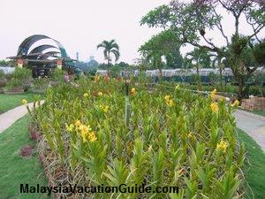 KL Orchid Flowers