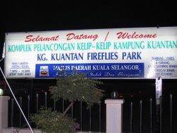 Kg Kuantan Fireflies Park