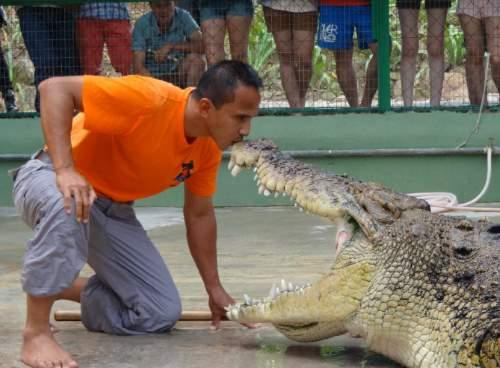 Close encounter with the crocodiles