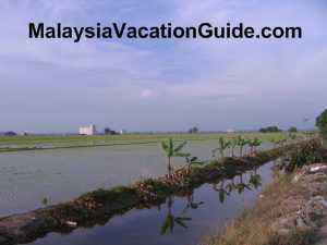 Irrigation system of paddy in Sekinchan