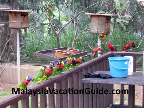 Colourful Birds At Kuala Lumpur Bird Park