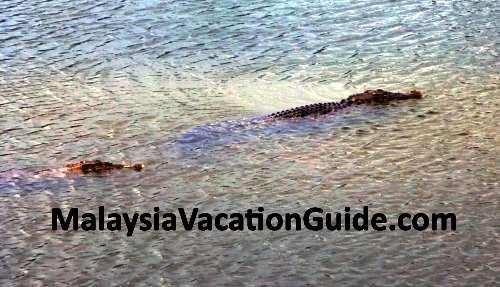 Paya Indah Crocodiles