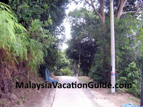 Penang National Park Trail