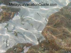 Kukus Island Fish