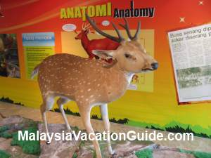 Deer At Natural History Museum Putrajaya