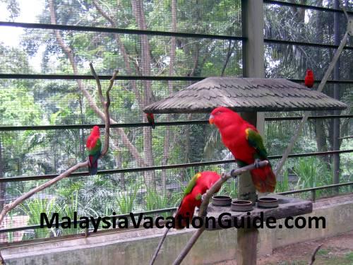 Kuala Lumpur Bird Park Parrots