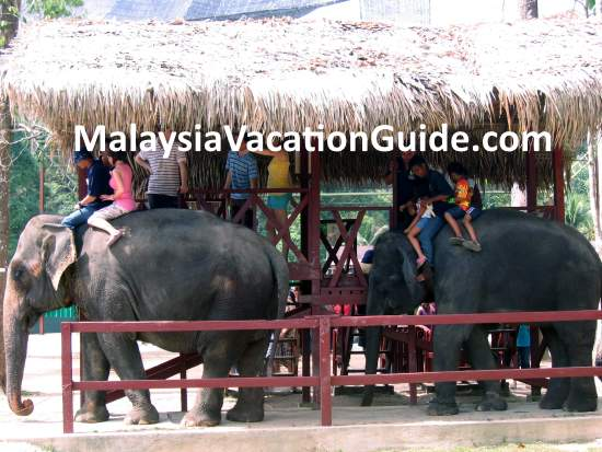 Riding the elephants at Kuala Gandah Elephant Sanctuary