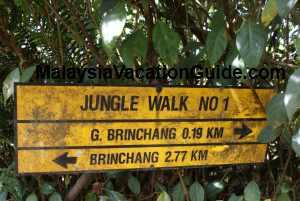 Cameron Highlands Jungle Walk