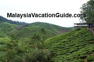 Sungai Palas Tea Plantation